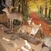 In het bosmuseum  IMG_2448