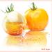 van 1 tomaat een glas tomaat gemaakt