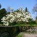 Mooie magnolia