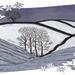 Sneeuwachtige landschap