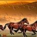 paarden in reliëf