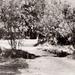 Schapenbruggetje 1954