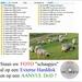 Zet uw vele Digitale foto's op Aanvul Cd of Externe HD