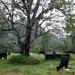 Anuradhapura - Lekker grazen