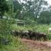 Regen.... dieren in veiligheid brengen
