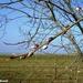 2011_01_30 Froidchapelle 15