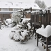 winter 2010 (11)