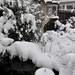 winter 2010 (12)