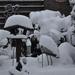 winter 2010 (4)