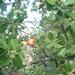 13 San Jose -- Monteverde _P1070685