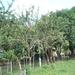 13 San Jose -- Monteverde _P1070690 _kalebasbomen