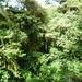 15 Monteverde, Selvatura park, hangbruggen _P1070723