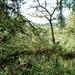 15 Monteverde, Selvatura park, hangbruggen _P1070730