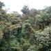 15 Monteverde, Selvatura park, hangbruggen _P1070733