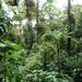 15 Monteverde, Selvatura park, hangbruggen _P1070738