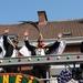Carnaval Merelbeke 019