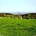 2011_04_17 Honnay 21