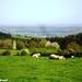 2011_04_17 Honnay 22