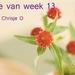 jarige week 13