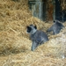 ZOO 27-7-2010 026
