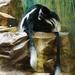 ZOO 27-7-2010 030