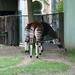 ZOO 27-7-2010 035