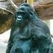 ZOO 27-7-2010 041
