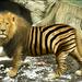 zebra leeuw