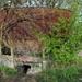 SCHAARBEEK BERM 20110407 (3)