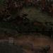 080628 WaterlooOverijseLeuvenHolsbeek 008