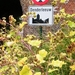 2011_07_10 Denderleeuw 025