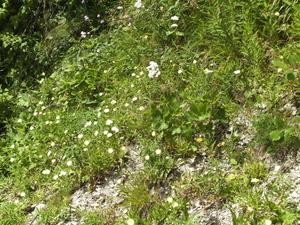 Nogal wat kleine bloemetjes