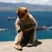 2011-05-30_SPANJE_Gibraltar (34)