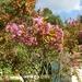 Cévennes Provence 2011 098