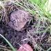 2011_09_03 Oignies-en-Thiérache 028