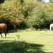 2011_09_03 Oignies-en-Thiérache 031