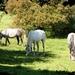 2011_09_03 Oignies-en-Thiérache 033