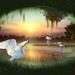 Watervogels bij zonsondergang
