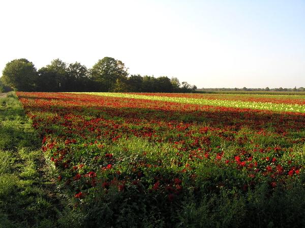 sept 2011 235