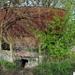 SCHAARBEEK BERM 20110407  (5)