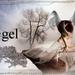 Engel2