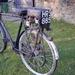 Cyclaid 1955