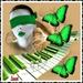 Blinde pianiste