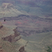 Grand Canyon - Condor in vlucht