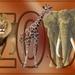Tekst Zoo