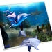 Dolfijn ontsnapt