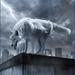 wolf in onweer