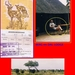 ZUID AFRICA (11)