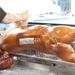 Speenvarken, verser kan het niet