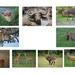 dieren overzicht